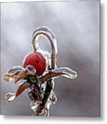 Iced Rose Hips Metal Print