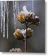 Icicles And Ice Flowers Metal Print