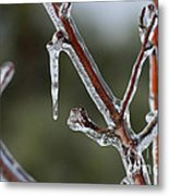 Icy Branch-7463 Metal Print