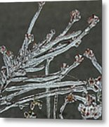 Icy Branch-7474 Metal Print