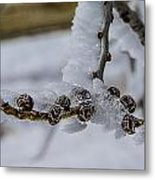 Icy Branch Metal Print