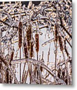 Icy Cattails Metal Print