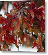 Icy Oak Metal Print
