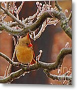 Icy Perch Metal Print