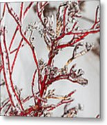 Icy Red Dogwood Metal Print