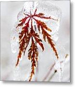 Icy Winter Leaf Metal Print