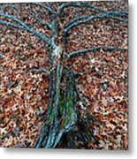 If A Tree Falls In The Woods Metal Print