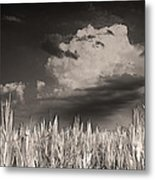 If You Build It He Will Come Metal Print by William Fields
