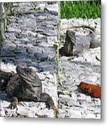 Iguana Bask In The Sun With You Metal Print
