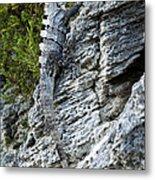 Iguana En La Roca Metal Print