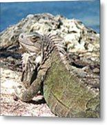 Iguana In The Sun Metal Print