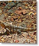 Iguana On A Trail In Manuel Antonio National Preserve-costa Rica Metal Print
