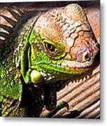 Iguana On The Deck At Mammacitas Metal Print