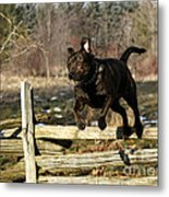 I'll Jump Over Fences For You Metal Print