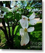 Illinois Capitol Dogwood Metal Print