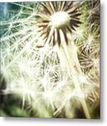 Illuminated Wishes Metal Print