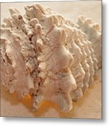 Illumination Series Sea Shells 11 Metal Print