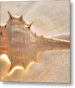 Illumination Series Sea Shells 6 Metal Print