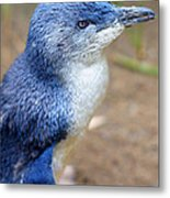 I'm Blue - Penguin Metal Print by DerekTXFactor Creative