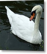 Im Not A Ugly Duck Metal Print