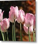 Images Of Spring Metal Print