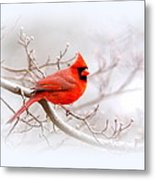 Img_2559-8 - Northern Cardinal Metal Print