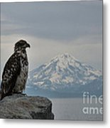 Immature Eagle And Alaskan Mountain Metal Print