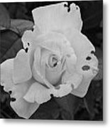 Imperfection Metal Print