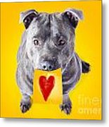 Imploring Staffie With A Sticky Note On His Mouth Metal Print