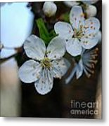 In Bloom I Metal Print