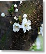 In Bloom Iv Metal Print