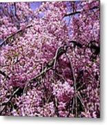 In Bunches Metal Print