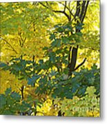 In Due Time Metal Print
