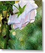 In Early Morning Light - White Rose Metal Print