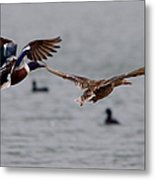 In Flight Side By Side Series 2 Metal Print
