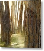 In Pine Forest Metal Print