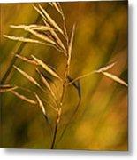In Praise Of Grass 3 Metal Print