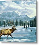 In The Absarokas - Elk Metal Print