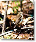 In The Bushes Metal Print