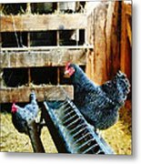 In The Chicken Coop Metal Print