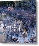 In The Corner Of The Pond Metal Print