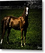 In The Corral 1 - Featured In Comfortable Art And Wildlife Groups Metal Print