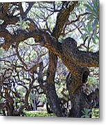 In The Depth Of Enchanting Forest II Metal Print
