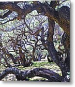 In The Depth Of Enchanting Forest Metal Print
