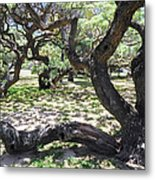 In The Depth Of Enchanting Forest V Metal Print