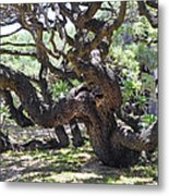 In The Depth Of Enchanting Forest Vi Metal Print