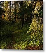 In The Druid Cathedral Metal Print