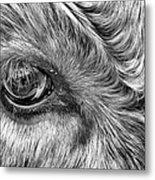In The Eye Metal Print