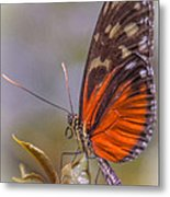 In The Morning Metal Print by Jill Balsam