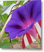 In The Morning - Summertime Metal Print